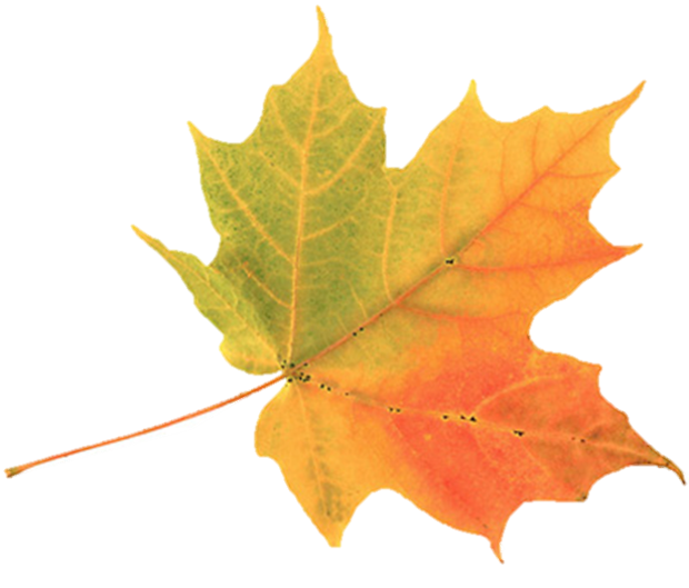 fall leaf 1.png